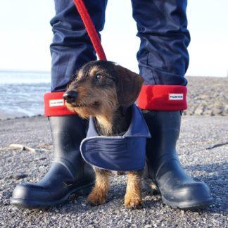 Dackel Bruno im blauen Trenchcoat an der Nordseeküste