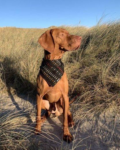 Halstuch für Hunde