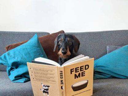 "Dachshund Mikkel reading the book ""Feed Me"""
