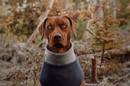 Ridgeback Berlibu im maßgeschneiderten Hundepullover