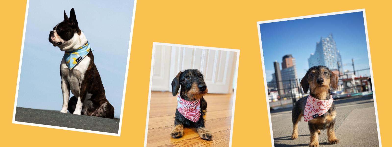 Dekoratives Headerbild zum Thema Hundehalstücher