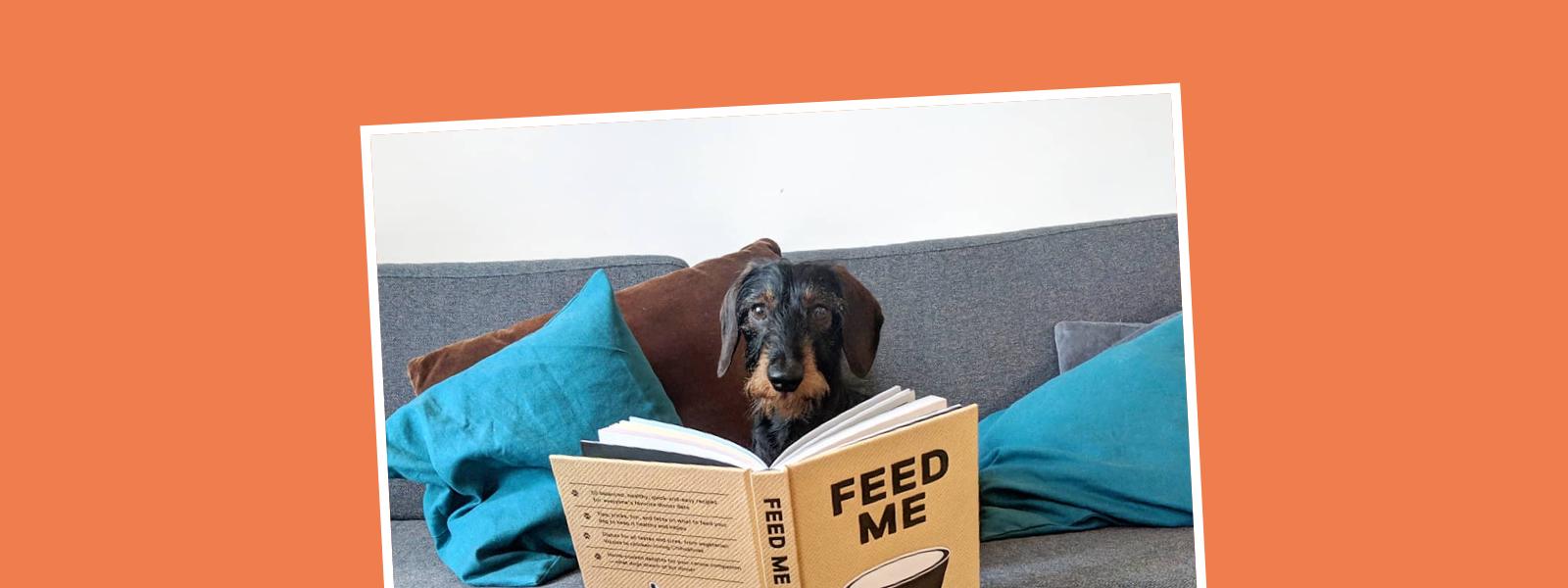Dekoratives Headerbild zum Thema Hundebücher