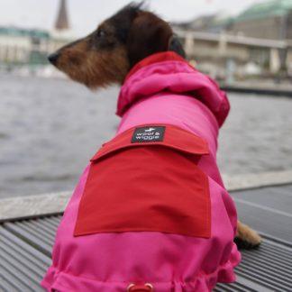Bassotto Brunoa in una giacca da pioggia rosa e rossa