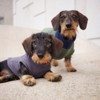 Teckel Bruno met Sidekick Kalle in een sweater