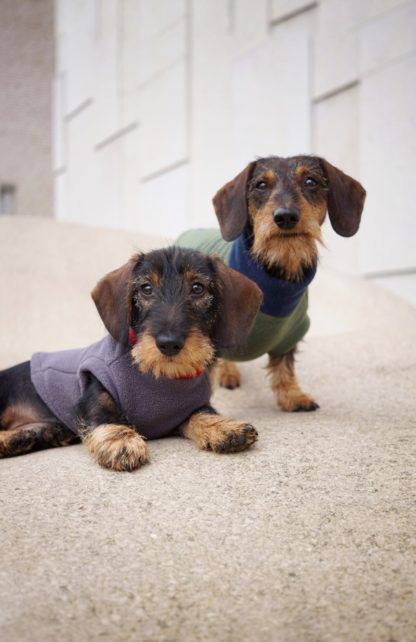 Teckel Bruno met Sidekick Kalle in een sweater