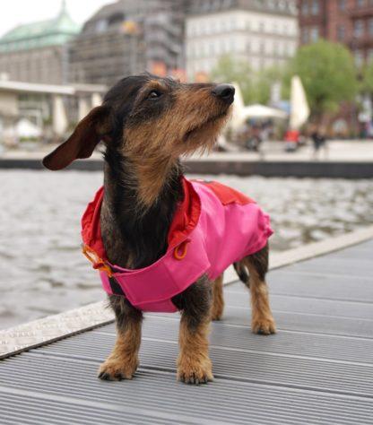 Teckel Bruno an der Alster in een roze en rode regenjas
