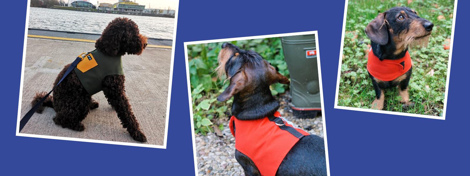 Dekoratives Headerbild zum Thema Hundegeschirre
