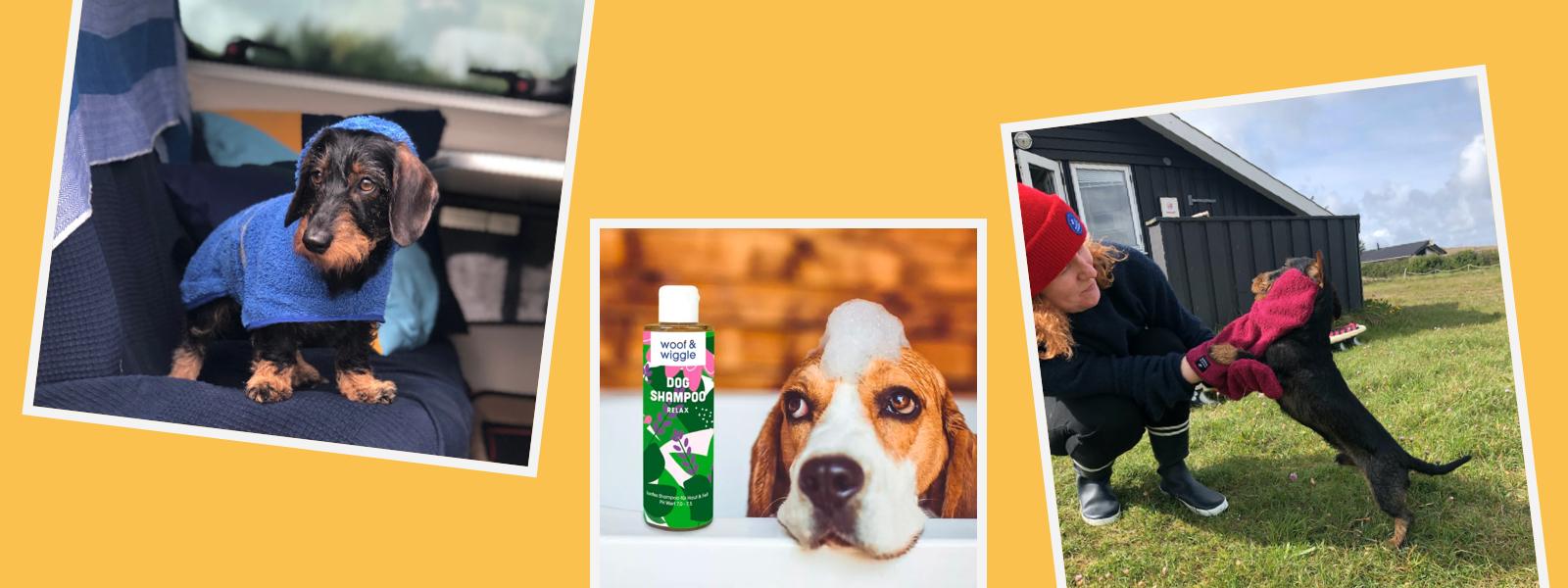 Headerbild Hundepflege