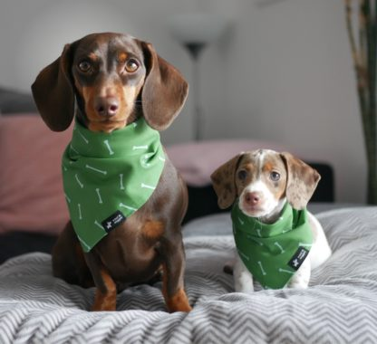 "Dachshunds Ida and Vio with their ""Tulum"" bandanas"