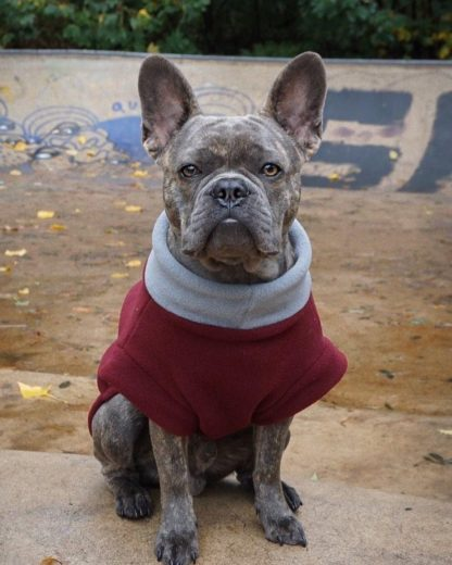 Frenchie Karl in een getailleerde sweater in Bordeaux grijs