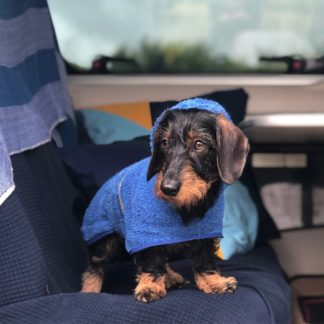 Dachshund Mikkel in his drying poncho