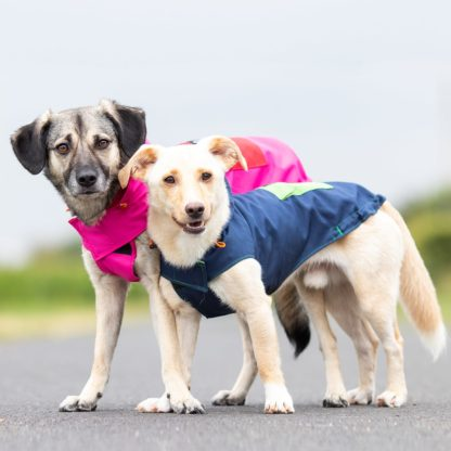 Two dogs in their woof & wiggle raincoats