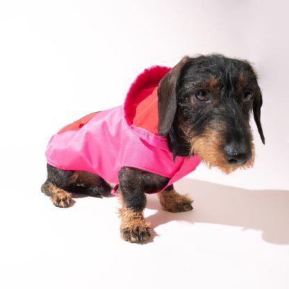 Dachshund wearing a raincoat