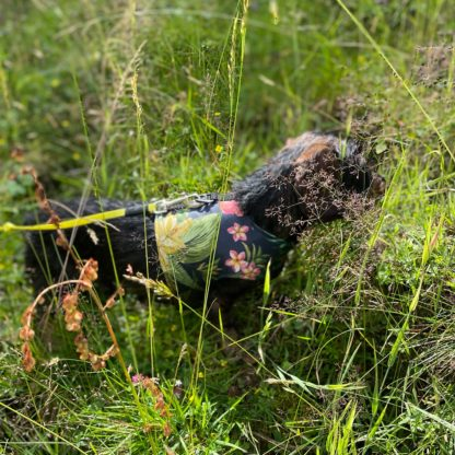 Hundegeschirr in Westenform Hawaiihemd