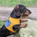 Hondentuigje kleur geel