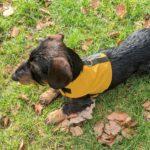 Hundegeschirr Farbe gelb