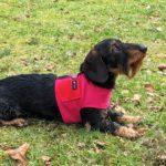 Hundegeschirr Farbe pink