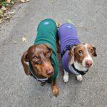 Hondensweater op maat gemaakt van Polartec fleece