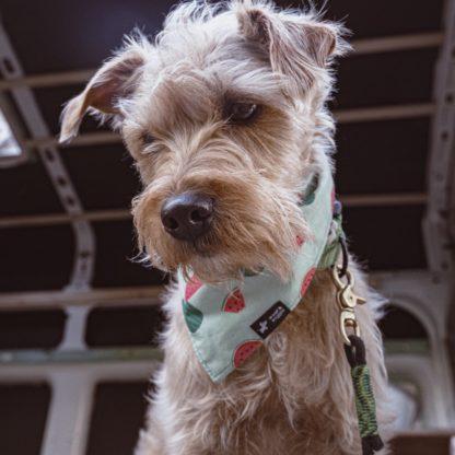 Hondenbandana met meloenpatroon