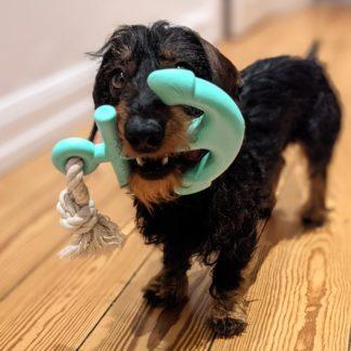 Waggo anchor dog toy