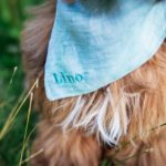 Hundehalstuch in grau und türkis mit individuellem Namensstick