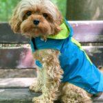 Hunde Regenmantel in Petrol Lime
